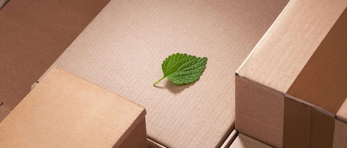 leaf-on-cardboard-packaging